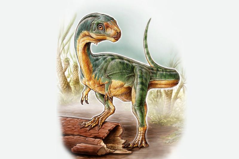 Hallado en Chile un dinosaurio con cuerpo de puma y manos de tiranosaurio