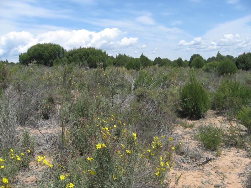Las sequías alteran la diversidad microbiana del suelo aumentando el CO2