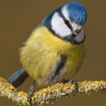 Entre mayor sea el esfuerzo por la crianza de los hijos, más rápido envejecen las aves