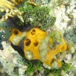 Estrategias de las esponjas marinas para sobrevivir en el ártico y en el trópico