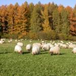 Agricultura regenerativa para conseguir pastos más fértiles y con mayor biodiversidad vegetal