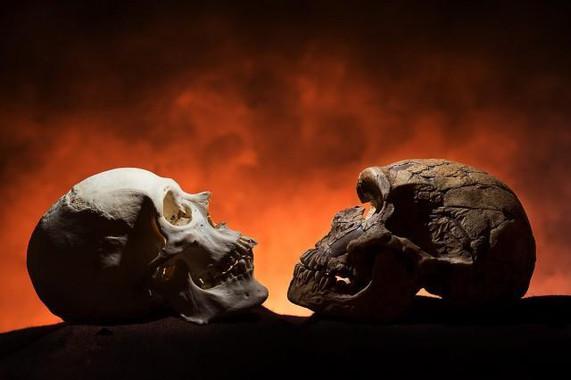 ¿Por que los antepasados del hombre no tenían barbilla?
