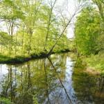 Los efectos del cambio climático en los microorganismos del suelo dependen de la deposición atmosférica de nitrógeno