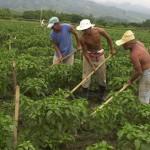 En condiciones de esclavitud y trabajo forzado cerca de 2 millones de campesinos e indígenas en México: Armando Bartra