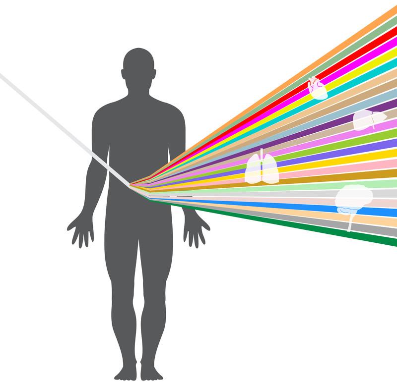 La variación genómica es mayor entre órganos que entre individuos