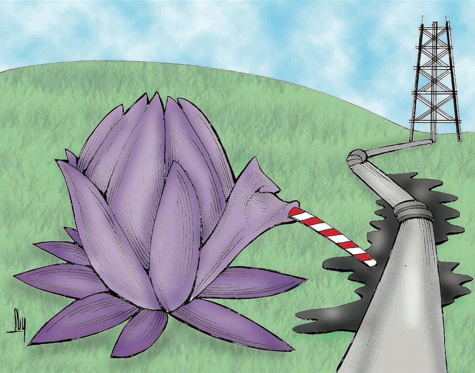 Lirio acuático para atender derrames de hidrocarburos y aceites