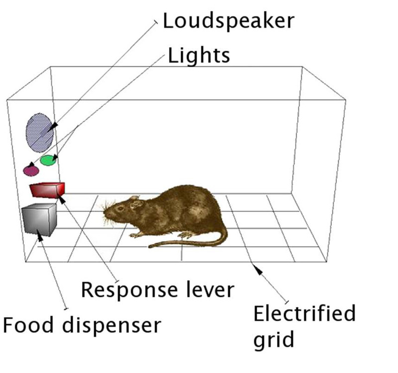 Ratón en experimento de comida- UPF