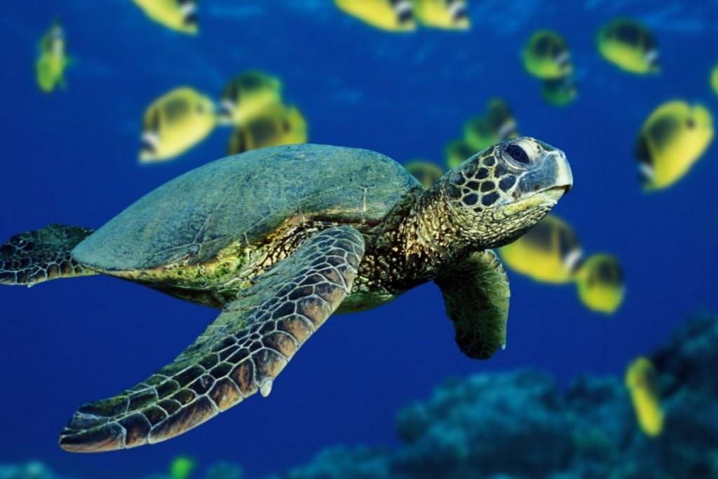 Por falta de conocimiento de la biodiversiad marina se desaprovechan los recursos y se pone en riesgo la sustentabilidad