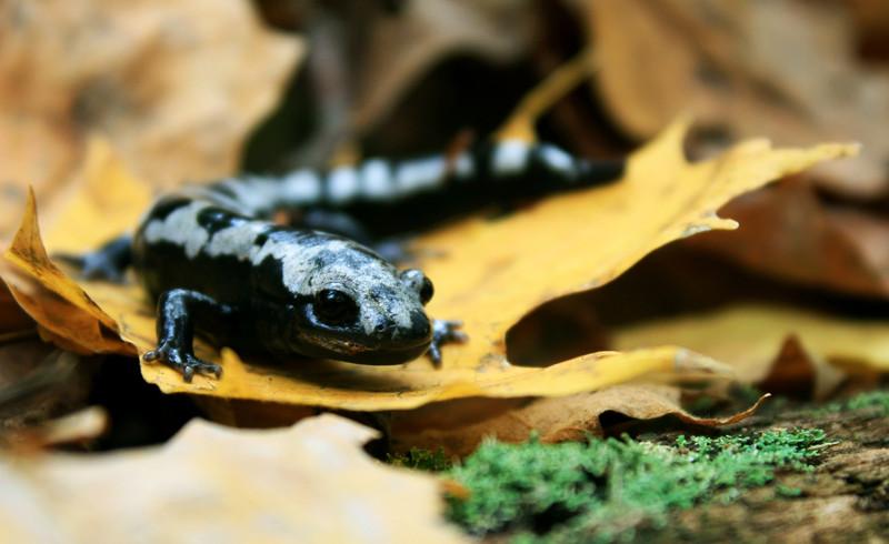 Una de cada seis especies sufre riesgo de extinción por el cambio climático