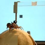 Cómo los cangrejos huyen de sus depredadores