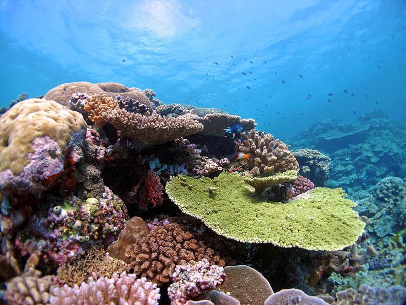 Algunos corales ya se están adaptando al calentamiento global