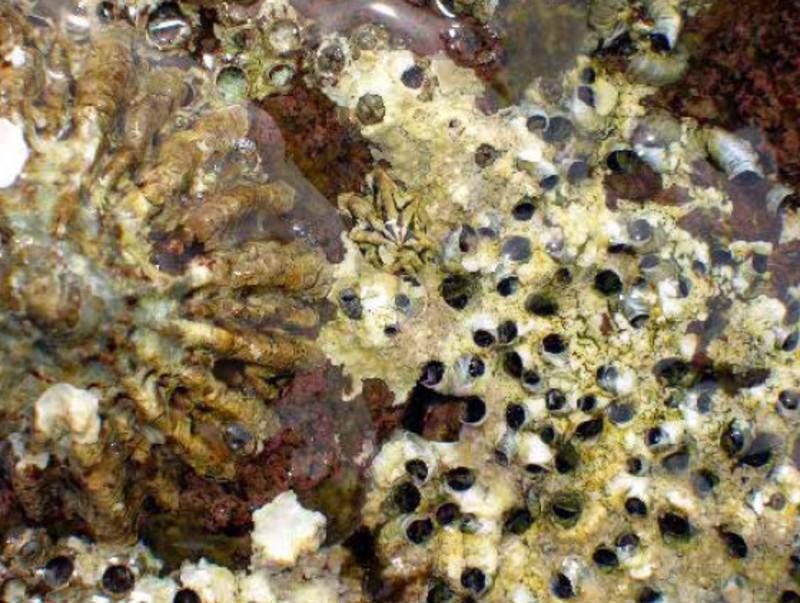 Hallada una especie de molusco que pudo sobrevivir a la desecación del Mediterráneo