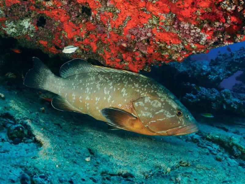 La sobrepesca es la principal amenaza para los peces de los mares europeos
