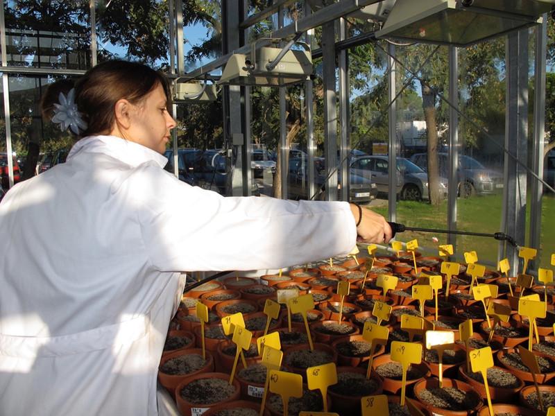 Las plantas carnívoras atrapan menos insectos tras un incendio