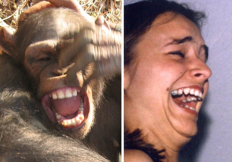 Los chimpancés adaptan su sonrisa como los humanos
