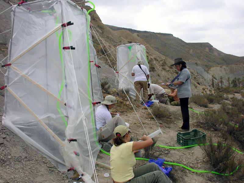 Los microorganismos de la superficie de los suelos áridos protegen frente a la erosión
