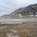 Los virus del Ártico son únicos