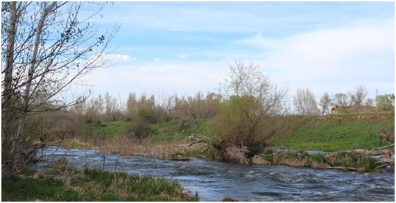 Un 'software' que diagnostica la salud de los ríos