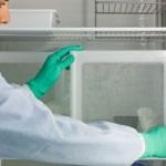 Un fármaco mata al parásito de la malaria con una dosis barata