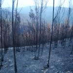 Los incendios y las lluvias posteriores movilizan el mercurio de los suelos