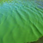 Lo bueno y lo malo de las algas