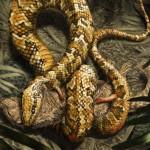 La serpiente primitiva tenía cuatro patas y vivía en madrigueras