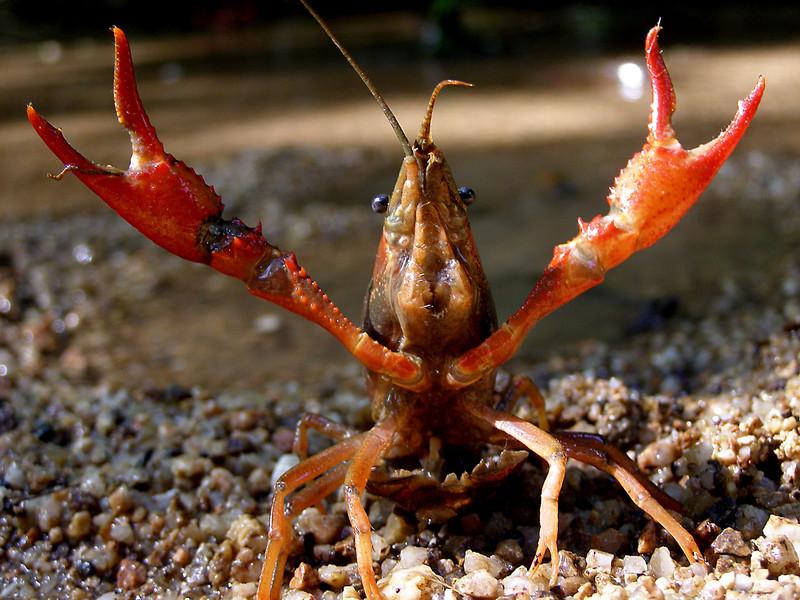 Las especies invasoras causan el declive de las comunidades acuáticas