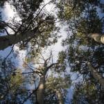 Las sequías ralentizan el crecimiento de los bosques