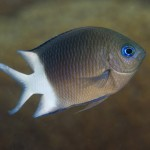 Los genes permiten a los peces aclimatarse al aumento de temperaturas