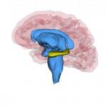 Los pacientes con depresión recurrente tienen un hipocampo más pequeño