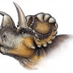 Un nuevo dinosaurio revela la evolución de los cuernos en los 'Triceratops'