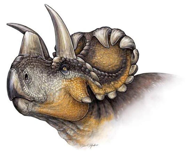 Reconstrucción de Wendiceratops pinhornensis- Danielle Dufault