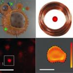 Un nanocalentador ofrece aplicaciones contra el cáncer