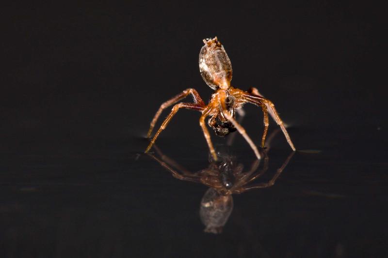 Una araña en el agua- Alexander Hyde