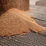 Logra empresa mexicana eliminar plagas de grano almacenado, con ozono