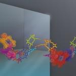 PAPETS: la física cuántica proporciona una visión sorprendente de los procesos biológicos