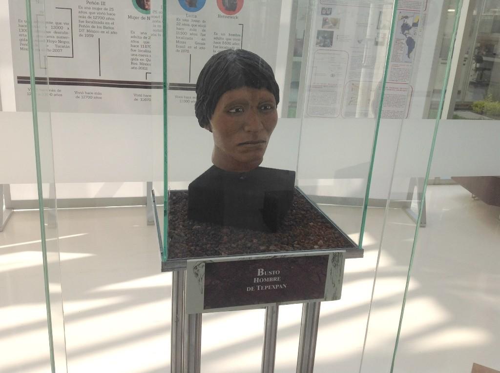 Exhiben cráneos de los primeros pobladores de México