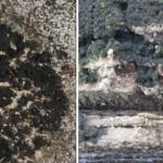 Demostrada la especialización ecológica de los líquenes