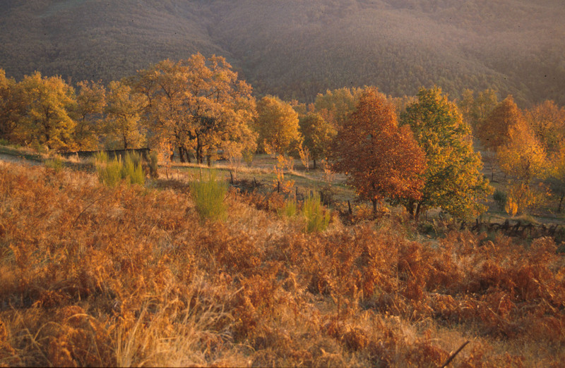 Desarrollan un gran estudio global sobre biomasa forestal