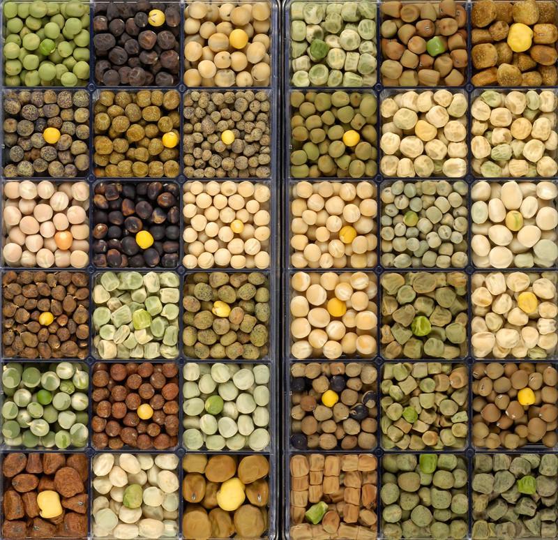 Desarrollan un nuevo tipo de guisante que facilita la digestión de proteínas