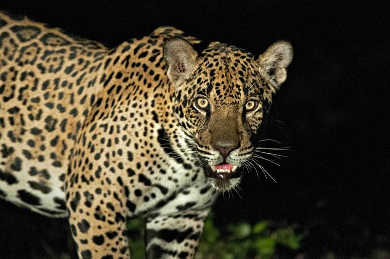 Genética para desenmascarar a los traficantes de vida salvaje