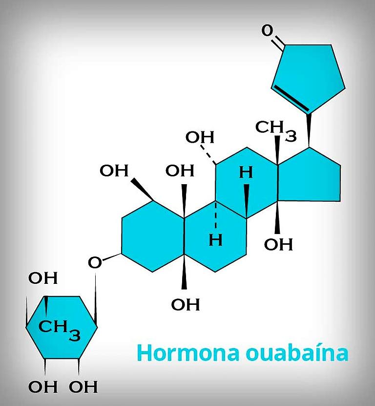Científicos mexicanos identifican hormona con propiedades anticancerígenas