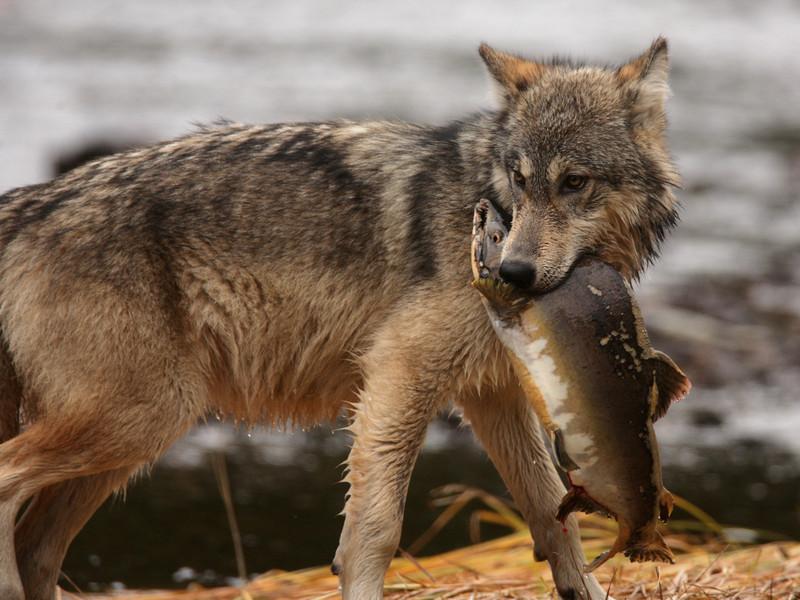 Los humanos, una especie no sostenible de superdepredadores