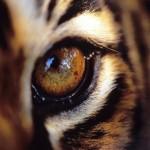 ¿Por qué las especies animales tienen ojos diferentes? (VIDEO)