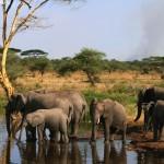 Sin los humanos, todo el planeta podría parecerse al Serengueti