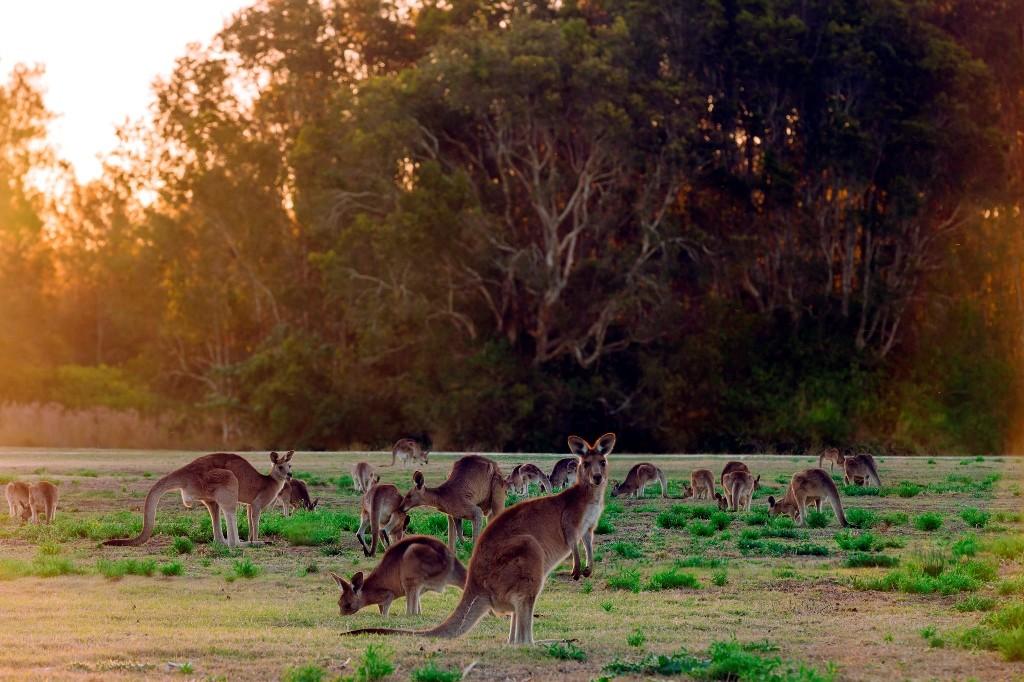 Los marsupiales actuales pueden haber tenido su origen en América