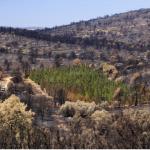 Barreras verdes de cipreses podrían reducir el riesgo de inicio de incendios