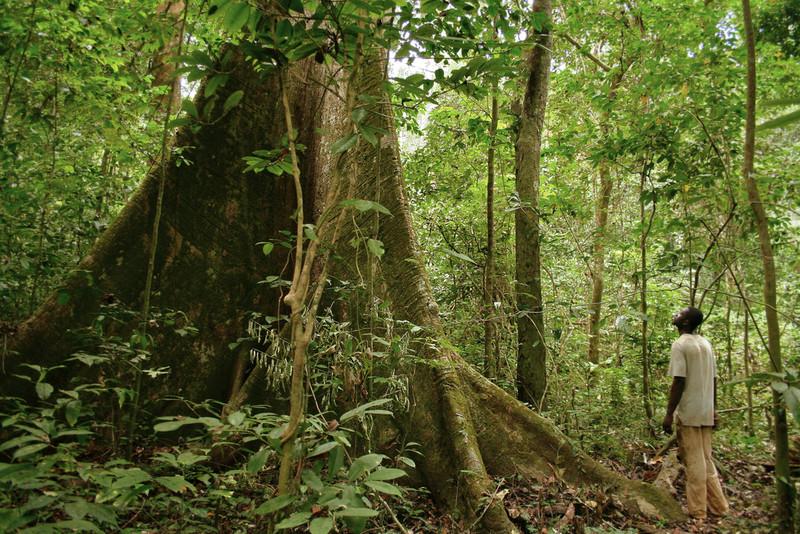 Cinco países africanos firman un compromiso contra el comercio ilegal de madera
