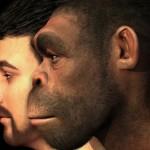 Cuatro grandes etapas marcaron la evolución del cuerpo humano