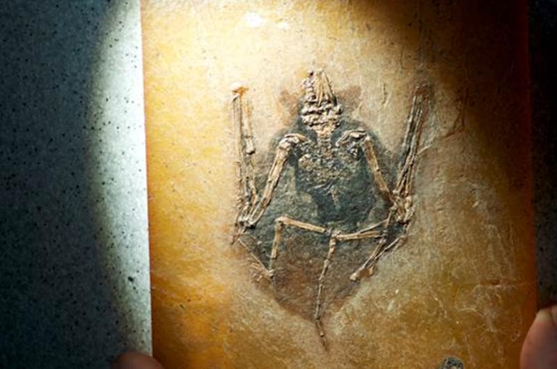 El pigmento de los fósiles revela el color de mamíferos extintos